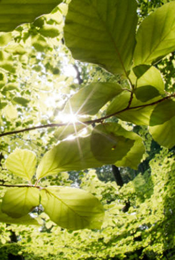 Il miracolo della fotosintesi clorofilliana